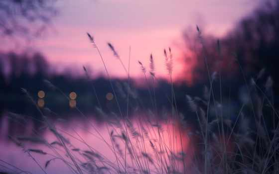 природа, вечер, трава