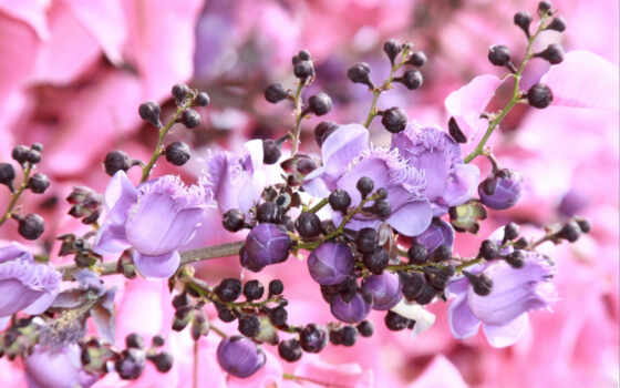 play, цветочная, красавица, pentru, cu, flori, next,