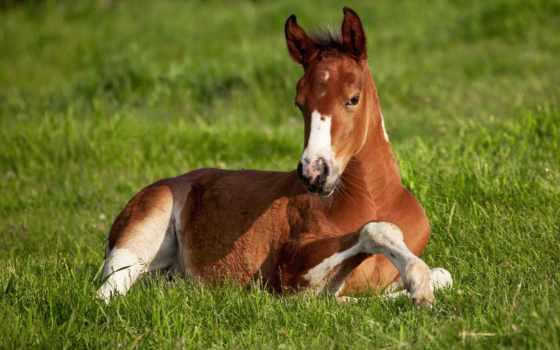 zhivotnye, лошадь, лошади