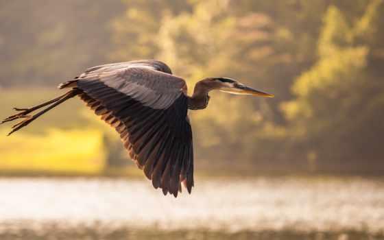 crane, птица, цапля, water, пруд, полет,