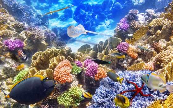 world, underwater, клипарт, графики, бесплатные, дизайна, страница,