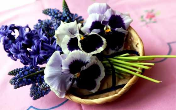 анютины, глазки, букет, цветы, мускари, гиацинтовый, корзина,