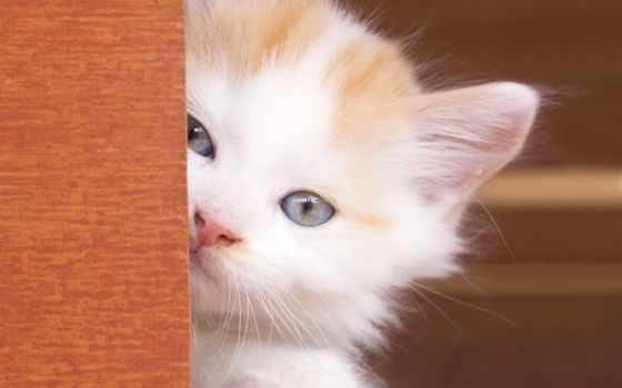 white, eyes, kitty, кот, сладкое, cats, animal,