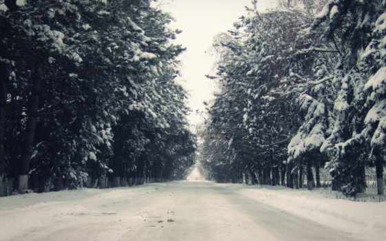 winter, елки, снег, лес,