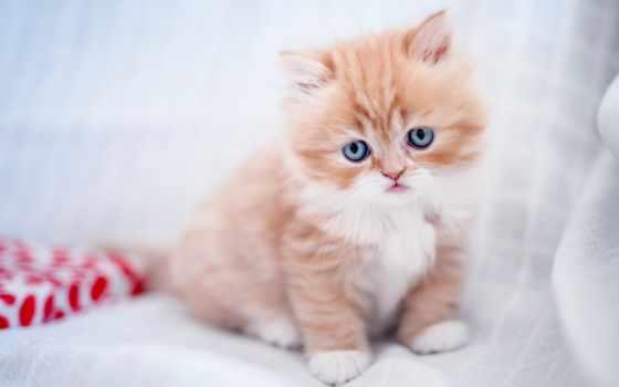 котенок, red, малыш, cats, funny, animals, кот, свет, трава, голубые, white,