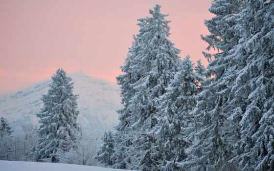 winter, снег, trees, eli, вечер, хвоя, лес, холмы,