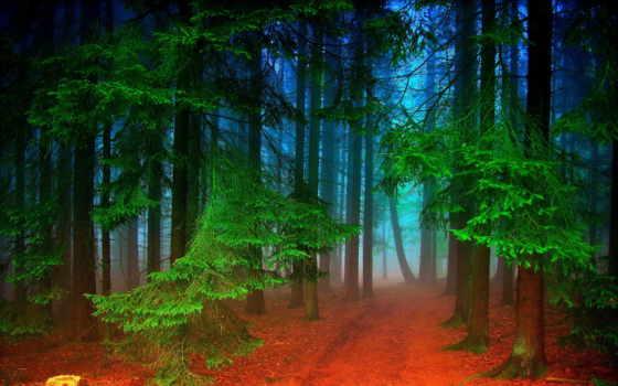 лес, яndex, коллекция