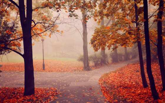 gif, утро, хороший, осень, animate, тенор, наклейка, conversation