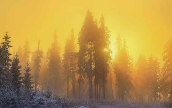 winter, лес, снег, природа, yellow, утро, устройство, компьютер, smartphone