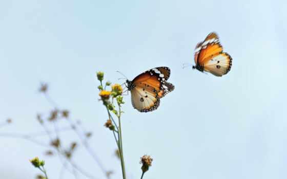 цветы, бабочка, насекомое, yellow, пчелка, качество
