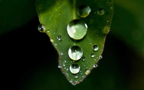 капли, лист, листе, резкость, растение, зелень,