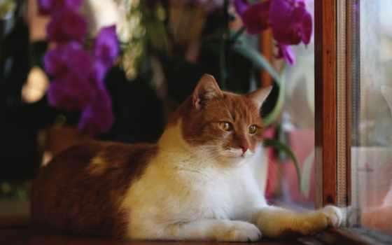 животные, кошки, коты Фон № 50218 разрешение 2560x1600