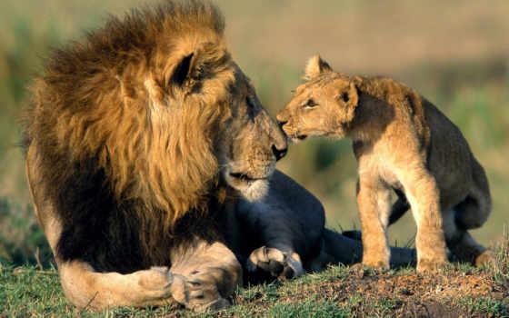 лев, львенок, льва, тело, человек, головой,