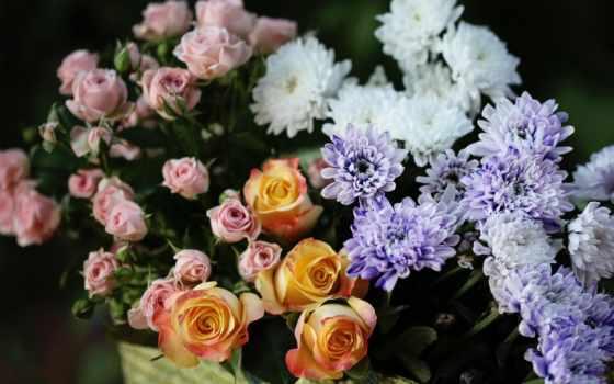 хризантемы, розы, цветы