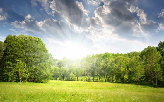 поляна, les, деревя, vesna, лучи, солнце,