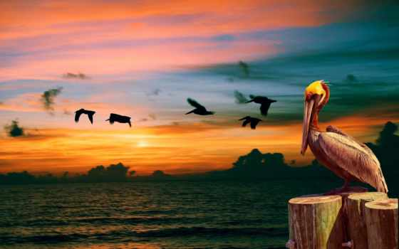 птицы, берегу, утренней