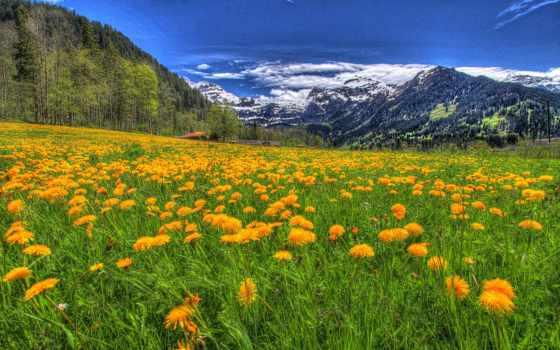 цветы, горы, природа, landscape, красивые, луг, trees, flowers, трава, eli,