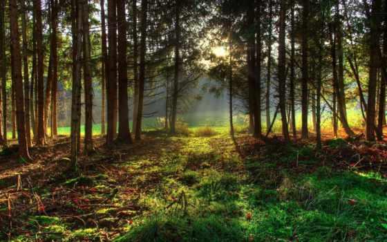 лес, хвойный, леса, burns, миллер, earl, gif, еловый,