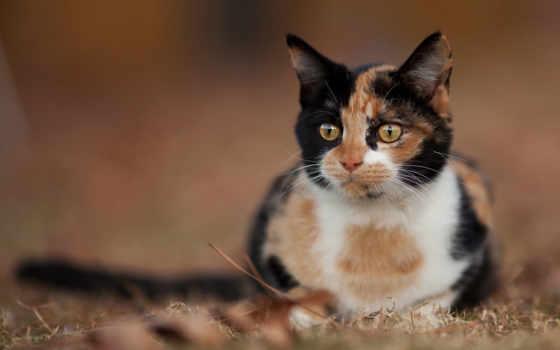 гость, cats, кот, animals, zhivotnye, тона, три, calico,