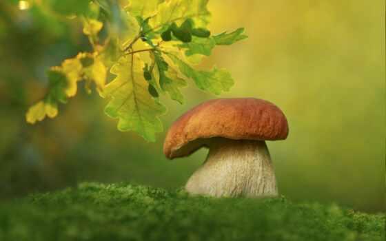 mushroom, mobile, фон, landscape, природа, tabiat