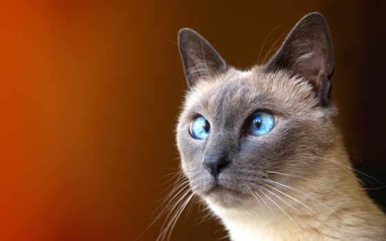 кот, усы Фон № 12702 разрешение 1920x1200