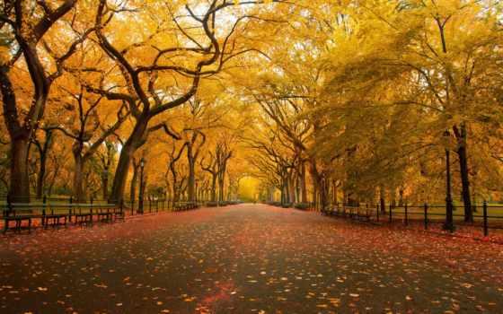 осень, парк Фон № 31550 разрешение 1920x1080
