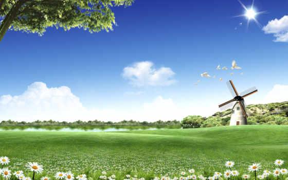 голуби, лужайка, ветряк, смотрите,