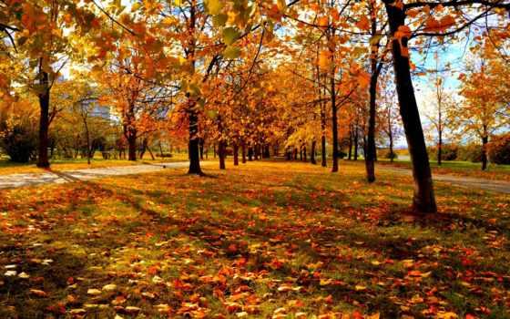 москва, осень, природа, природы, park, деревья, привлекательные, новой, листья,