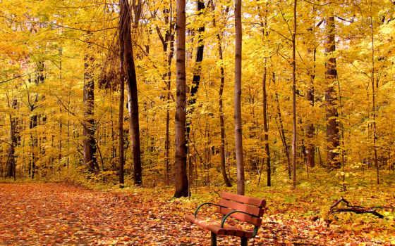 лес, код, товара