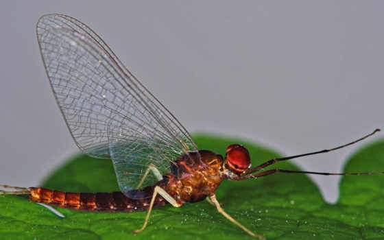 dragonfly, common, desktop, download, free, pictures,
