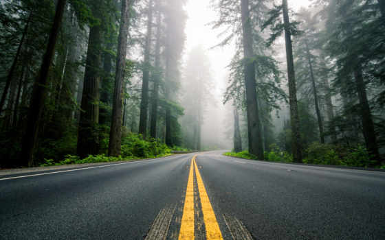america, природа, дорога