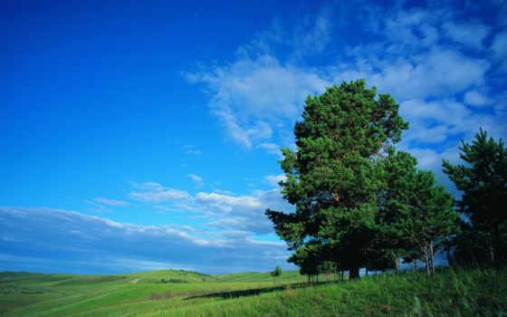природа, зелёный, рисунки, дерево, trees, summer, normal, wide, небо, трава,
