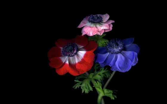 цветы, magda, индиго