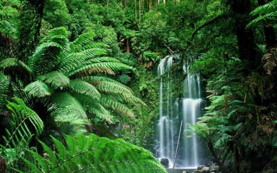 леса, амазонки, дождевые, лес, tropical, тропические,