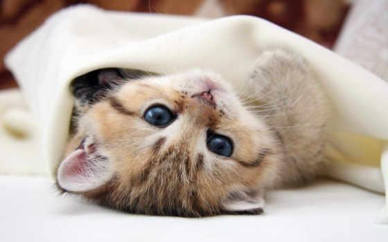 котенок, под, кошки