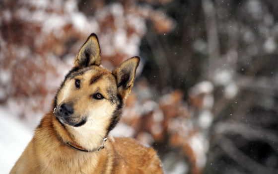 собака, winter, друг, zhivotnye,