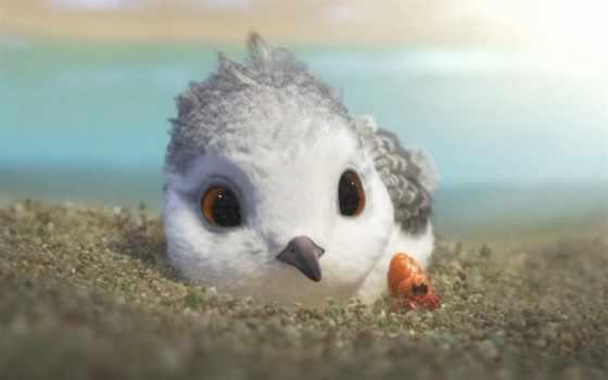 new, cute, птица, anim, disney, pixar, piper,