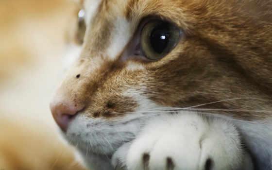 красивые, los, животных, кошек, más, увеличения, изображения, gatos, chistosos,
