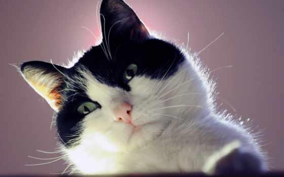 cats, кот, cute