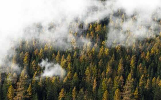 fore, гора, природа, дерево, foggy, туман, облако, зелёный, domain, landscape