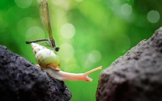 snail, стрекоза, id, fondo, caracol, фон, pantalla, насекомое