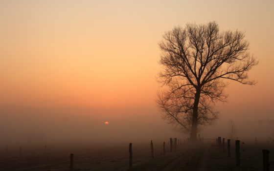 туман, дерево