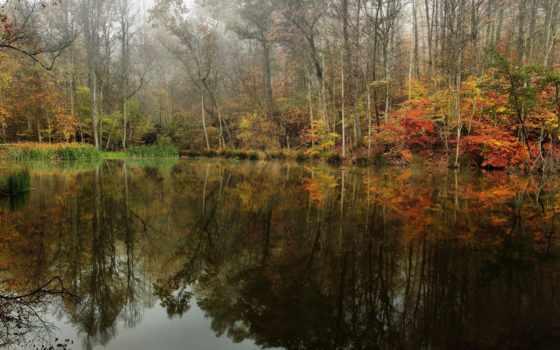 леса, природа, reki