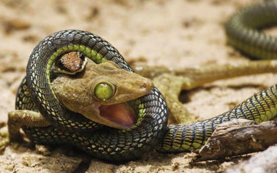 snake, ящер, бой