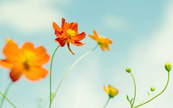 цветы, летние, fone