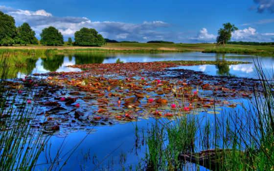 рыбалка, озеро, небо, река, water, лилии, совершенно, свой,