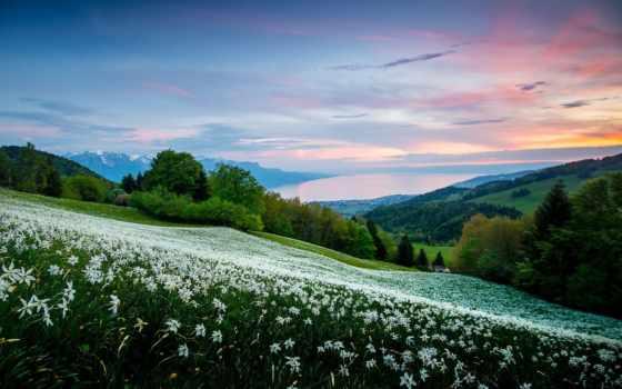 landscape, горы, поле, природа, закат, цветы, луг,