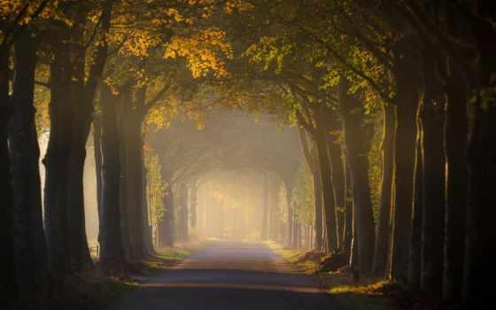 лес, дорога, сквозь, густой, trees, landscape, авто, горы, разных, разрешениях, elena,
