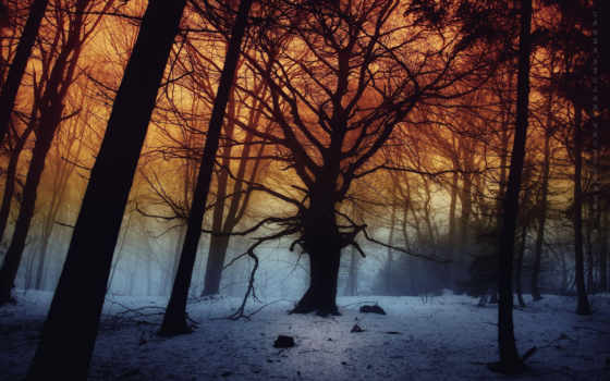 nera, notte, tutto, matino, umberto, foggy, лес, dell, ди,