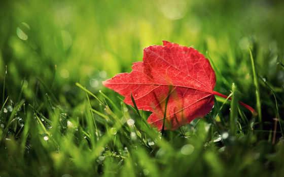 осень, листья, science